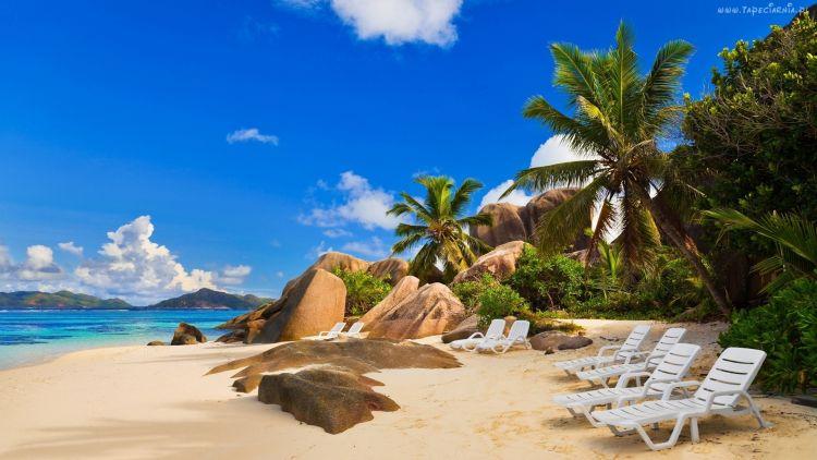 palmy,plaża,kamienie