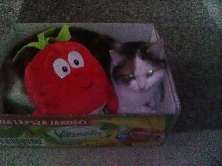 Kot jest zadowolony ze świerzaka