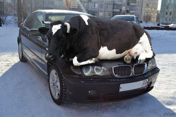 Nie zostawiać na parkingu)