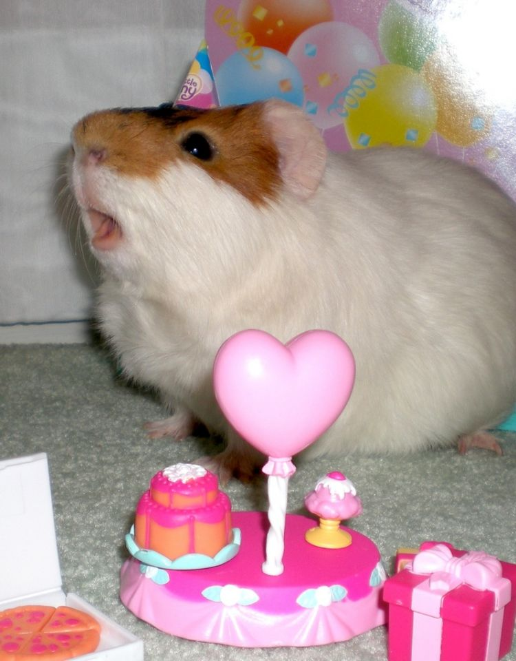 Chomiczkowe urodzinki :D