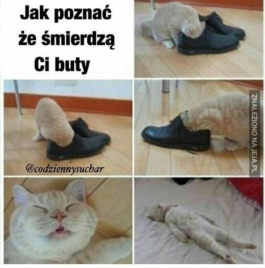 biedny koteł