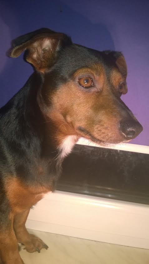 Mój prawdziwy pies