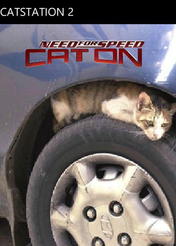 Need for speed carbon w wersji dla kotów!