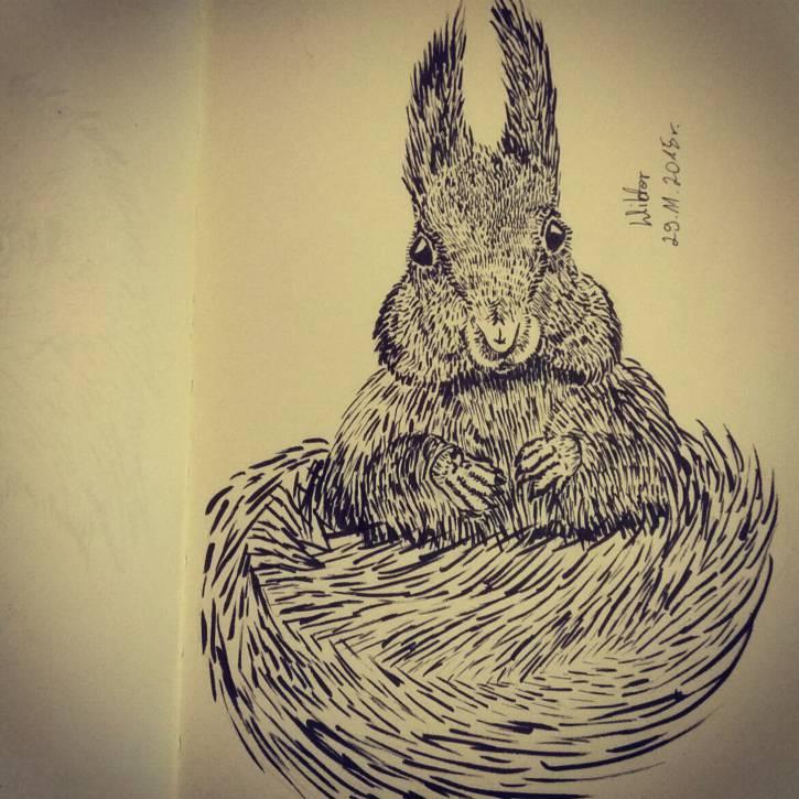 Wiewiórka (nie królik)