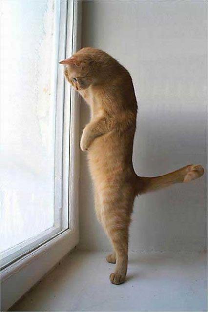Kot Na Stojąco