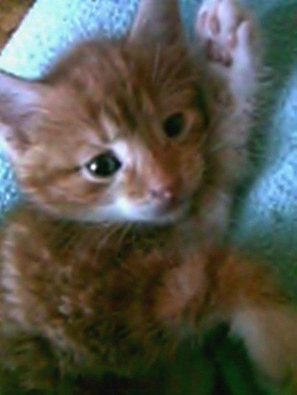 mały koteczek