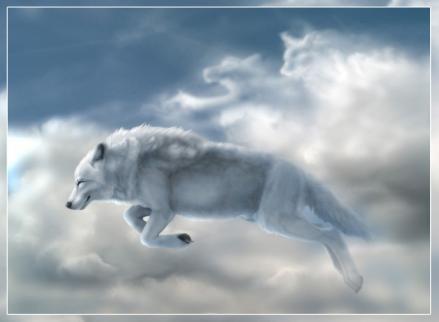 wilk w chmurach