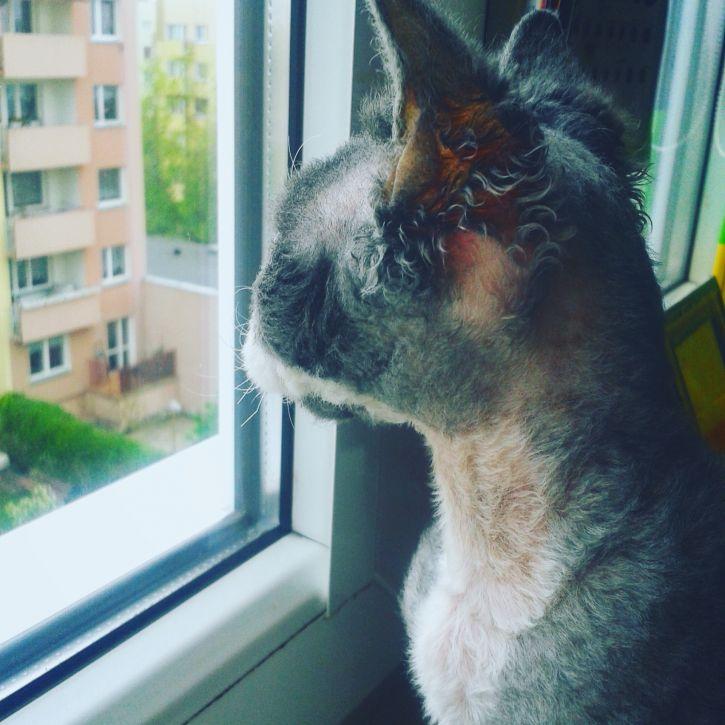 Mój koteł :3