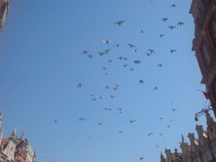 Gołębie na tle nieba