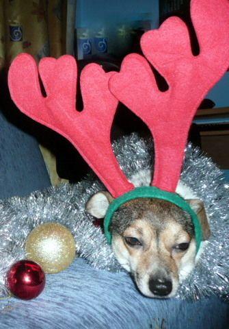 Tak psy obchodzą święta............. TORTURY !!!!!