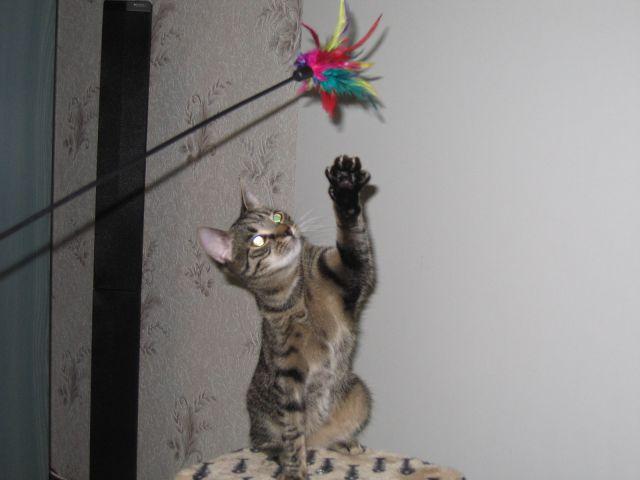 Mój kotek :D
