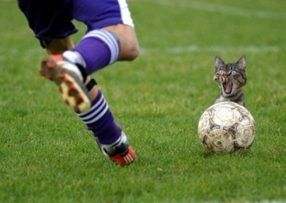 Kopnięcie w... kota