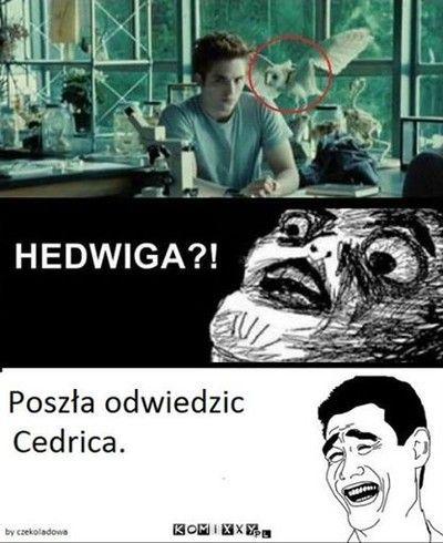 Hedwiga???