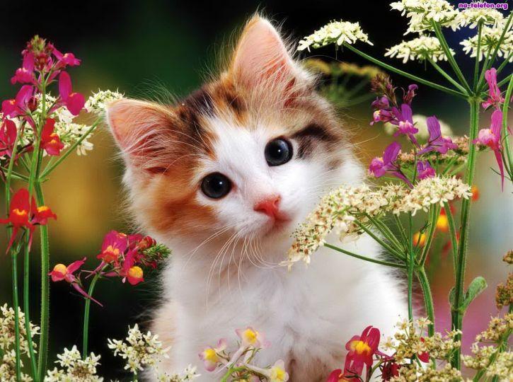 Kotek na łące