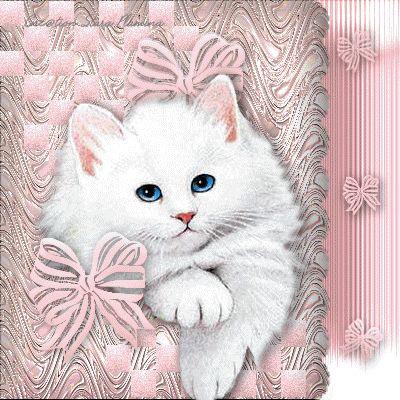 kotełek :3