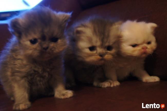 moje 3 inne kotki