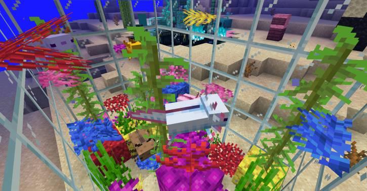 małe akwarium dla axlolotlów
