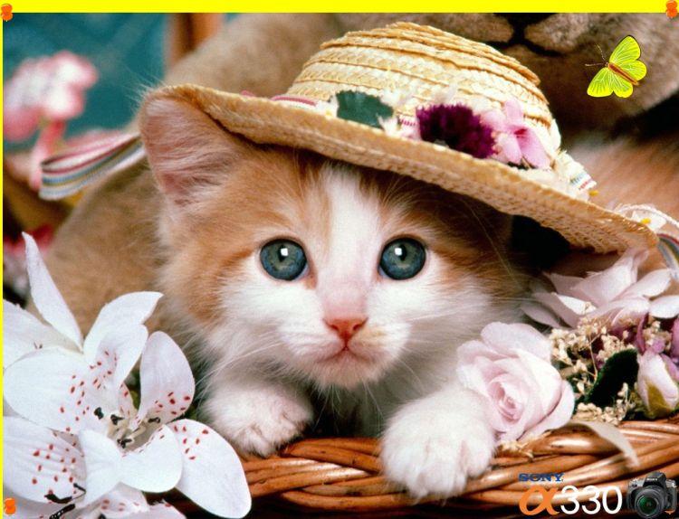 kotek w kapeluszu