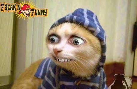 Jaki Kot Jakie Oczy :O