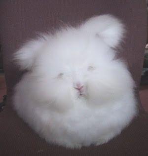 mój króliczek