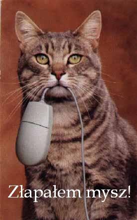 Ten kot upolował mysz
