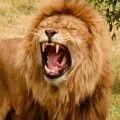 Lwisko