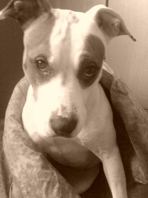 Moja Carmen