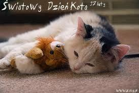 Słodki kociaczek