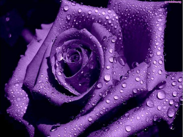 Różyczka ♥♥♥