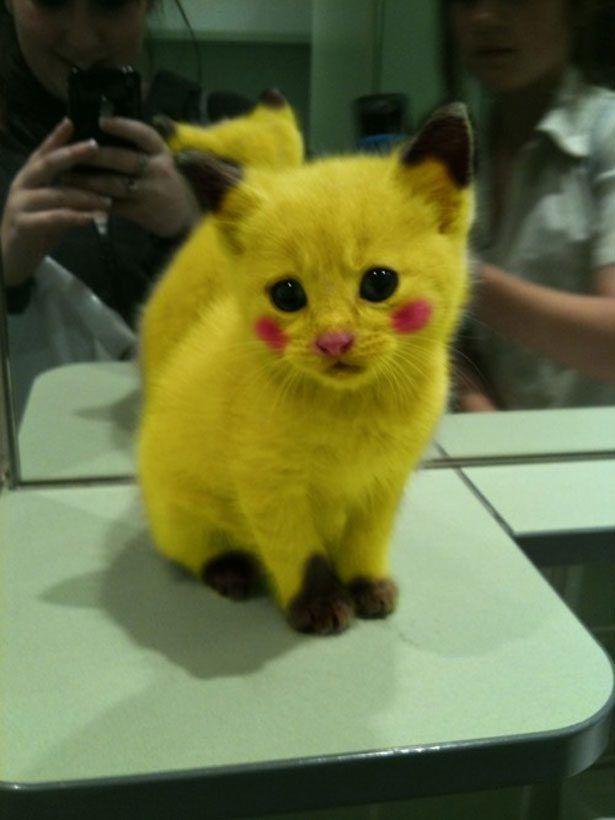 Patrzajcie jaki fajny kotełek =D