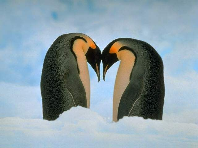 Pingwiny