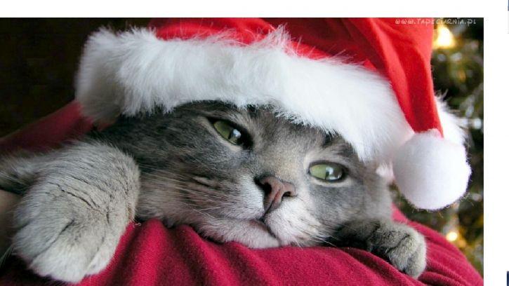 Świąteczny koteł