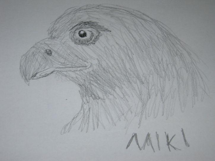mój rysunek głowy orła