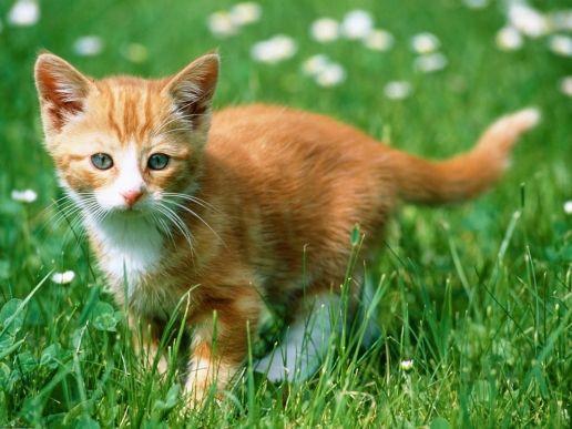 kolejny kotek