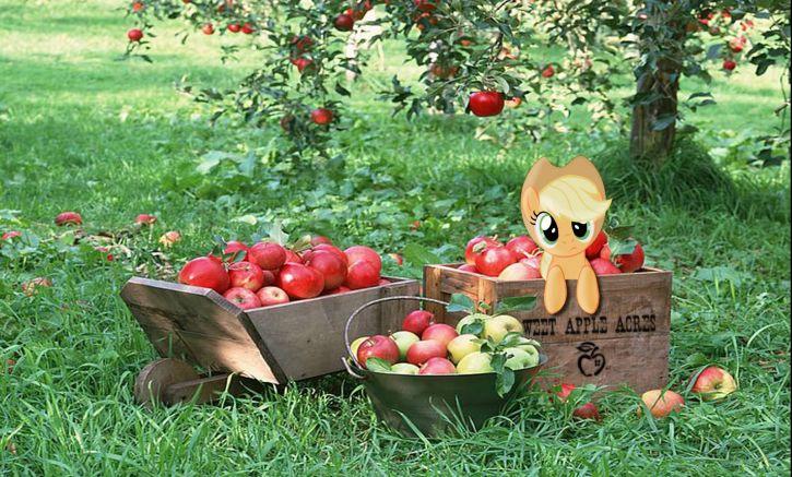 Apple jack u mnie w sadzie hehe żart