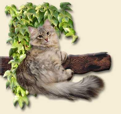 Mój Kot :)