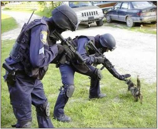 Akcja oddziału swat.