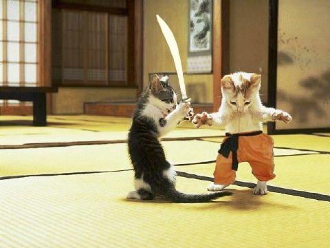 Walka kociaków