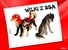 3 wilki BBA