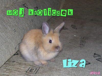 Mój króliczek!!!!