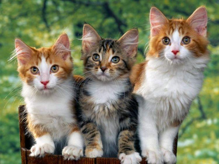 kotki trzy