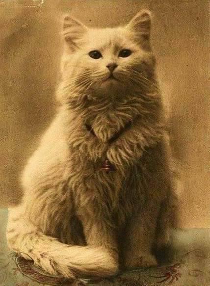 Pierwsze zdjęcie kota