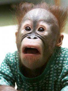 Małpka :D