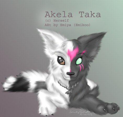 Mój wilk,Akela Taka