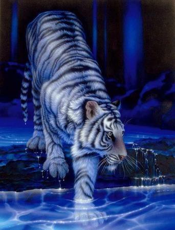 tygrysy kuzyni kotów
