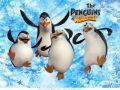 pingwiny z madagaskaru
