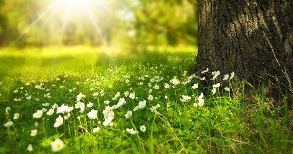 Wiosna trwa! Sprawdź, czego jeszcze nie wiesz o tej porze roku